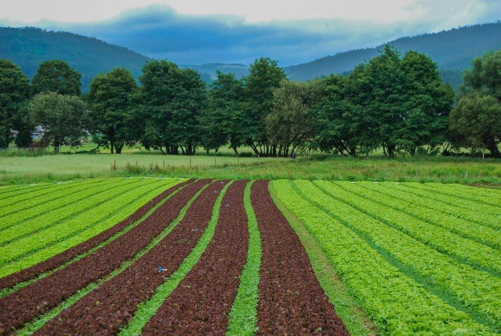 שדה יבול